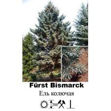 Ель Fürst Bismarck колючая