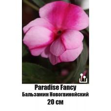 Бальзамин Новогвинейский Paradise Fancy