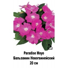 Бальзамин Новогвинейский Paradise Moyo