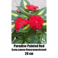Бальзамин Новогвинейский Paradise Painted Red