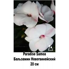 Бальзамин Новогвинейский Paradise Samoa