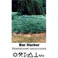 Можжевельник Bar Harbor горизонтальный