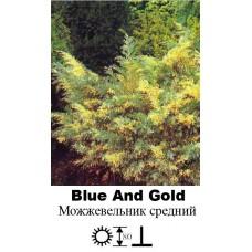 Можжевельник Blue And Gold средний
