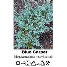 Можжевельник Blue Carpet чешуйчатый