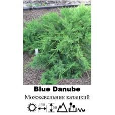 Можжевельник Blue Danube казацкий