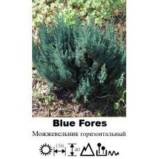 Можжевельник Blue Fores горизонтальный