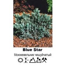 Можжевельник Blue Star чешуйчатый