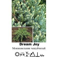 Можжевельник Dream Joy чешуйчатый
