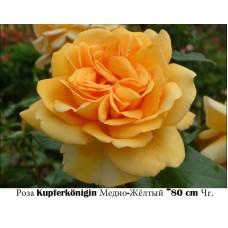 Роза Kupferkönigin