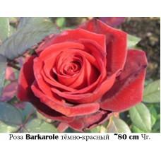 Роза Barkarole