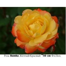 Роза Rumba