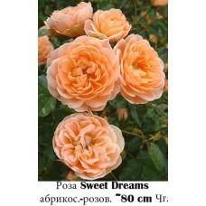 Роза Sweet Dreams