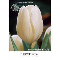 DARWISNOW