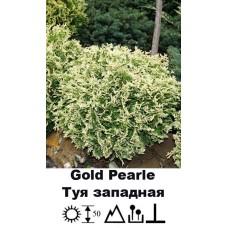 Туя Gold Pearle западная
