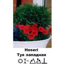 Туя Hoseri западная