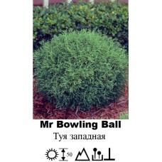 Туя Mr Bowling Ball западная